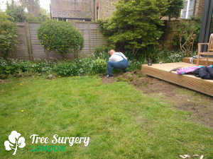 Expert Gardening Services in London