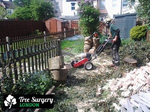 Comprehensive Stump Grinding located in London