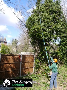 Proven Tree Care based around London