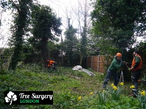 Excellent Tree Felling based around London