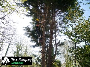 Second-to-none Tree Pruning around London