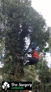 Top Quality Tree Pruning near London